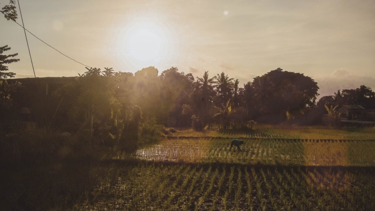 What to Expect for Your First Time in Bali - Rice Patty